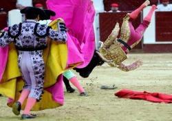 Il matador incornato e lanciato in aria dal toro di 485 kg