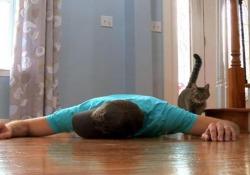 Il proprietario finge di morire per vedere la reazione del suo gatto