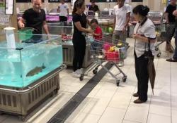 Il volo del pesce: dall'acquario salta direttamente nel carrello della spesa