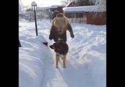 L'amicizia che non ti aspetti tra l'orso e il cane