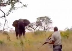 L'elefante carica, terrore durante il safari