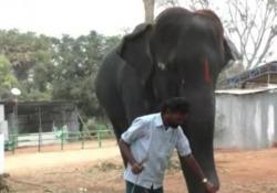 L'elefante suona l'armonica, il video virale sul web