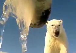 La caccia per il cibo, la vita tra i ghiacci: la giornata degli orsi polari con i loro occhi
