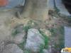 Marciapiedi danneggiati dalle radici degli alberi a Palermo, il Comune sollecita la Rap