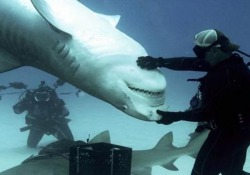 Quelli che 'giocano' con gli squali