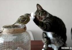 Questo gatto cerca di accarezzare l'uccellino