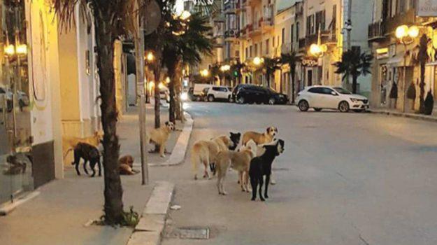animalisti, associazione veterinari, esche avvelenate licata, randagismo sicilia, Sciacca cani avvelenati, Nello Musumeci, Agrigento, Cronaca
