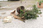 Rifiuti in strada e vandalismo a Nicosia, la denuncia social del sindaco