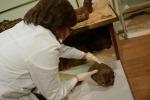 Meryt e Baby, le due mummie di Rovigo, la grande mostra e il cassetto segreto