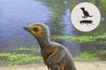 Ricostruzione del fossile di pulcino, vissuto circa 127 milioni di anni fa, nel Mesozoico, (fonte Raúl Martín)