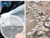 Dischetti di plastica misteriosi invadono spiagge Tirreno