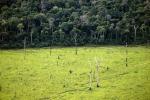 Ue, serve agire contro deforestazione in paesi esterni