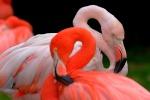 Seguendo i fenicotteri rosa: la rotta della felicità in 6 destinazioni