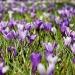 La primavera è già arrivata