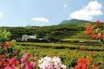 Da azienda vino 1.200 piante per rimboschimento Pantelleria