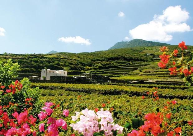 Vivaio Forestale Sicilia : Da azienda vino 1.200 piante per rimboschimento pantelleria