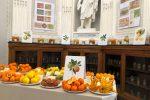 Zagara di Primavera, gli agrumi siciliani in mostra all'Orto Botanico di Palermo