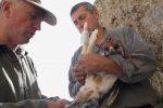 Un'aquila di Bonelli ferita a Licata torna a volare nei cieli di Caltanissetta
