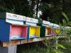 Lazienda Guna adotta unarnia con 50mila api