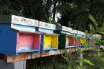 L'azienda Guna adotta un'arnia con 50mila api