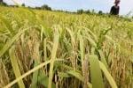 Nasce Irrigants Europa per agricoltura irrigua prodotti Med