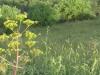 Presentata a Palermo la Consulta forestale