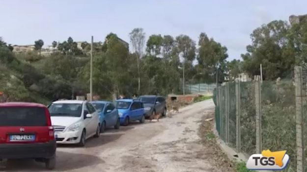 Sette cani avvelenati a Castellammare del Golfo