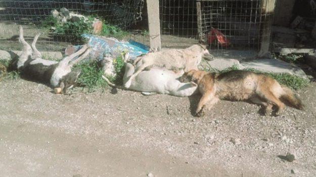 cani avvelenati sciacca, Agrigento, Cronaca