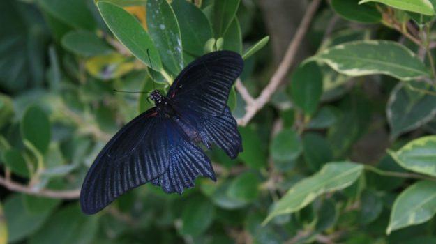 Siracusa casa farfalle, Siracusa, Cultura