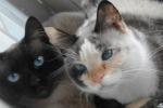 Sciacca, all'Asp una campagna per la sterilizzazione gatti gratuita