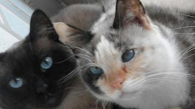 asp agrigento, sterilizzazione gatti gratuita, Agrigento, Cronaca
