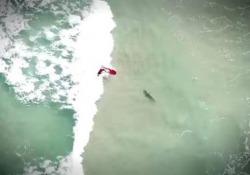 Col surf sopra lo squalo (e neanche te ne accorgi)