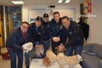 Ragusa, ruba sei cuccioli in una casa: denunciato pluripregiudicato