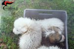 Giarratana, getta cinque cuccioli di cane in un fiume: denunciato un uomo