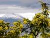 Maltempo: Coldiretti, Burian ha distrutto 20% raccolti ortaggi
