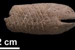 Ha 10.000 anni la prima salatura per conservare il cibo
