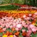Al castello di Pralormo Messer Tulipano