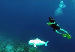 Ecco il robot-pesce, per esplorare le barriere coralline senza disturbare la vita marina