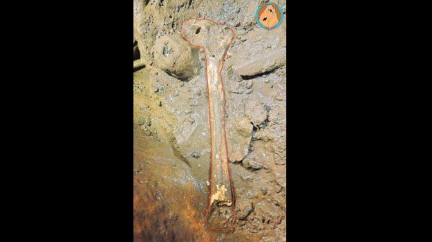femore homo sapiens custonaci, Trapani, Società