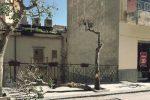 Vandali a Nicosia, distrutto un albero del centro storico