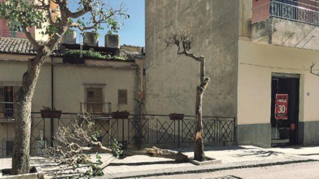 vandali nicosia, Enna, Cronaca