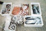Pesce non tracciabile in un furgone, sequestro da 26 chili a Licata