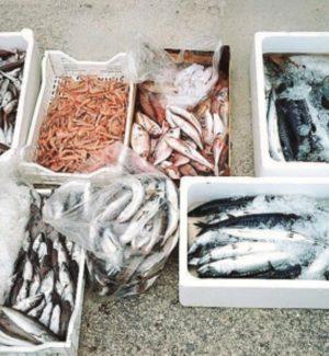 Sequestrati 200 chili di pesce mal conservato e senza tracciabilità ad Agrigento