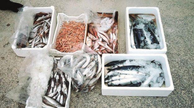 pesce sequestrato licata, Agrigento, Cronaca