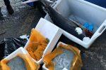 Sequestrati 200 chili di pesce non tracciabile a Catania: multe per 20 mila euro