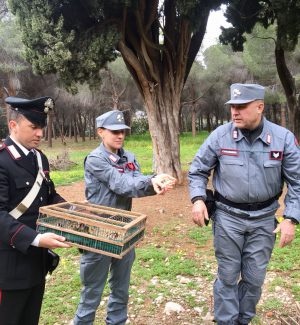 Palermo, vendita di cardellini a Ballarò: tre denunciati