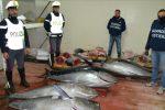 Sequestrati 800 chili di tonno rosso sulla Palermo-Messina