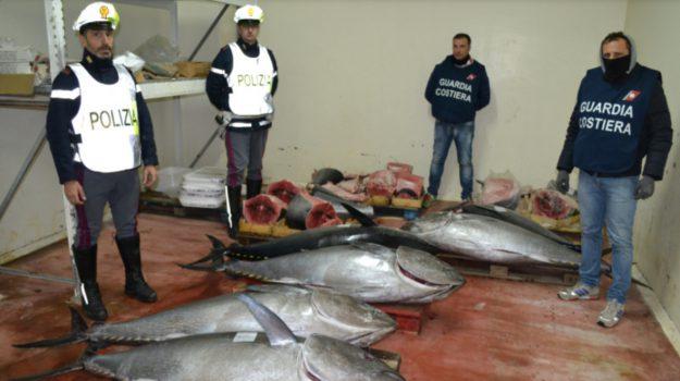 Tonno rosso sequestro, Messina, Cronaca