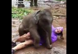 Thailandia, l'adorabile «attacco» del baby elefante alla turista