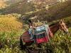Fao celebra il patrimonio agricolo di rilevanza mondiale